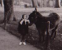âne au parc